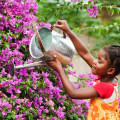 watering garden flowers