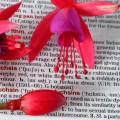 атрактивен език, екзотични езици, чужди езици