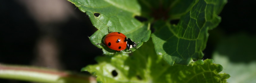 How to remove mites and aphids from plants