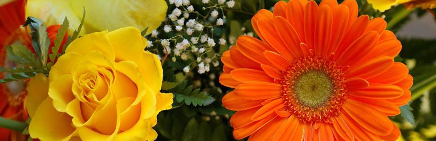 откъсване на цветя