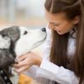 кучета, домашни любимци