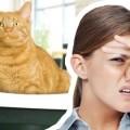Как да се освободите от миризмата на котка в къщата