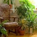 5 саксийни растения, създаващи идеален микроклимат в къщата