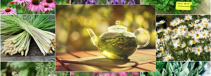 Какво билки са подходящи за домашен чай