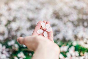 10 растения, които с положителна енергия