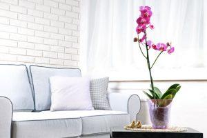Саксийни цветя за Везни - Орхидея