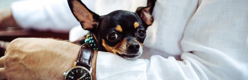 Най-малките породи кучета