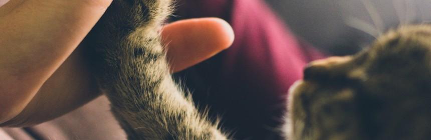 маркирането на котката