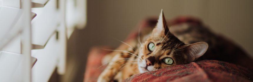 Защо мъркат котките