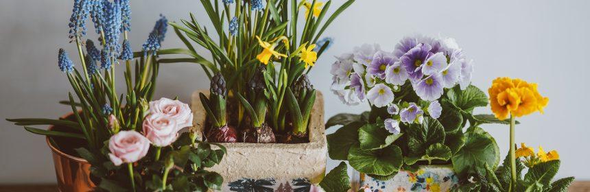 Интериорни растения, стайни растения