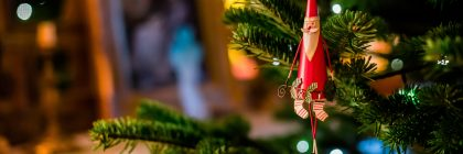 Как да изберем коледно дърво за Нова година