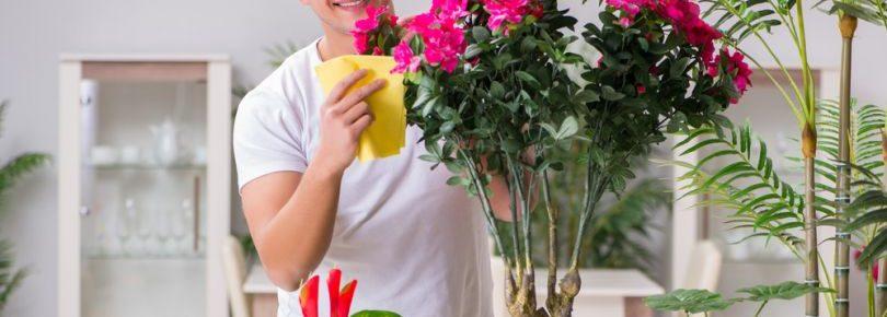 Как да подбираме стайни растения, според знака на зодиака
